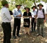 """Chương trình hợp tác trong """"Hoạt động nghiên cứu khoa học và chuyển giao công nghệ trên lĩnh vực nông nghiệp công nghệ cao"""""""