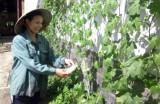 Xã Tân Thành, huyện Bắc Tân Uyên: Chị em cùng nhau trồng rau sạch tại nhà