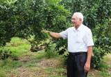 Lão nông 65 tuổi khởi nghiệp bằng trái quýt đường