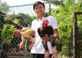 Chàng trai bỏ chức giám đốc, bắt đầu với nghề nuôi gà