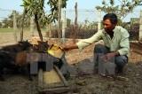 New policies to reduce poverty among ethnic minorities