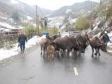 Yêu cầu các địa phương phòng chống đói rét cho gia súc