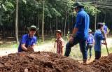 Xã Hưng Hòa, huyện Bàu Bàng: Cán đích nông thôn mới