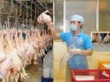 Tết Nguyên đán 2017: Không lo thiếu thịt và sốt giá thực phẩm