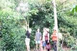 Phát triển vườn cây ăn trái Lái Thiêu gắn với du lịch