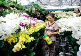 Nhộn nhịp thị trường cây, hoa cảnh tết
