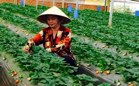 日本帮助林同省成为东南亚高价值农业中心