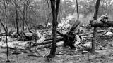Lật lại cuộc điều tra về cái chết của Tổng thư ký Liên hợp quốc Dag Hammarskjold