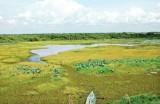 越南举行活动响应世界湿地日