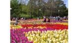 2017年大叻春季花卉节吸引10万人次前来参观游览