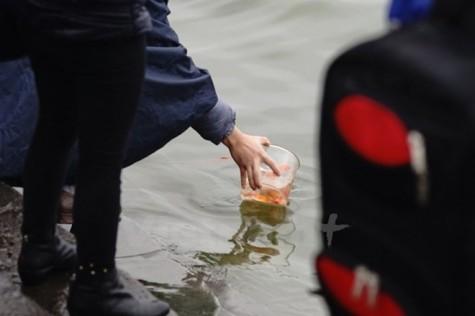 Đề nghị điều tra vụ việc phóng sinh loài cá ngoại lai xuống sông Hồng