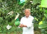 Tiếp tục hỗ trợ phát triển vườn cây ăn trái đặc sản