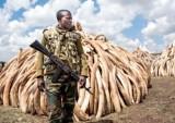 Những tập đoàn buôn lậu ma túy và ngà voi