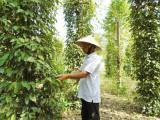 Phu Giao takes synchronous solutions on economic development