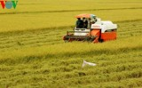 Vietnam aims to earn global reputation for rice quality