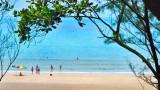 明珠岛上的阎浮树林