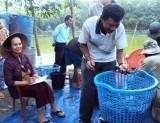 Hiệu quả từ mô hình nuôi cá nước ngọt ở Phú Giáo