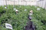 比利时专家:高新技术有助于提升越南农产品附加值