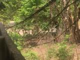 Vụ ngang nhiên rào chắn lối đi chung ở xã Bình Mỹ, huyện Bắc Tân Uyên:  Cần sớm cưỡng chế thi hành bản án có hiệu lực pháp luật