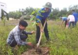 Xã đoàn Định An (Dầu Tiếng): Thực hiện công trình thanh niên trồng 200 cây xanh
