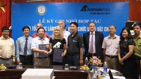 终止活熊取胆 保护野生熊 越南在行动