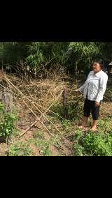 UBND thị trấn Phước Vĩnh, huyện Phú Giáo có cưỡng chế cắt bỏ hàng rào gia đình bà Phạm Thị Phó