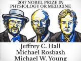 Giải Nobel Y học năm 2017 thuộc về bộ ba nhà khoa học Mỹ