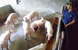 Phú Giáo: Gắn chăn nuôi với bảo vệ môi trường