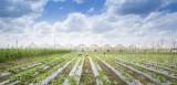 高技术农业:平阳农业的突破方向