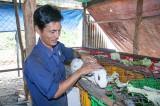 TX.Thuận An: Đầu tư mạnh cho nông nghiệp đô thị