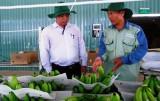 """Nông nghiệp công nghệ cao: """"Khát"""" lao động có tay nghề"""