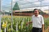 Bình Dương phát triển mạnh nông nghiệp đô thị