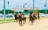 Trường đua Đại Nam tổ chức  giải đua xe và đua ngựa mừng năm mới 2018