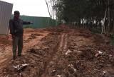 Khai thác và vận chuyển đất ở ấp 1B, xã Phước Hòa, huyện Phú Giáo: Gây hư đường, ảnh hưởng đến đời sống, sinh hoạt của người dân