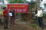 Hội Chữ thập đỏ TX Tân Uyên trao tặng bò sinh sản cho hộ có hoàn cảnh khó khăn