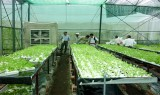 TX.Thuận An: Tăng cường áp dụng khoa học - công nghệ vào sản xuất