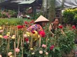 Nhộn nhịp thị trường hoa, cây cảnh tết