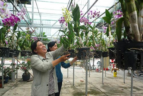 Phú Giáo: Nông nghiệp công nghệ cao phát huy hiệu quả