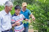 Bắc Tân Uyên: Hiệu quả từ áp dụng khoa học - công nghệ vào nông nghiệp