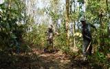 Phú Giáo: Thực hiện tốt giải pháp phòng chống cháy rừng