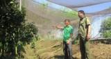 Bảo vệ vườn cây ăn trái ở xã Tân Định, huyện Bắc Tân Uyên: Chính quyền và người dân cùng chủ động phòng ngừa