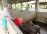 Hội Liên hiệp Phụ nữ huyện Bắc Tân Uyên: Nhiều cách làm hay giúp hội viên vươn lên