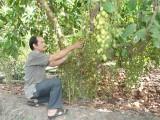 Xã An Sơn, TX.Thuận An: Khai thác tốt lợi thế để phát triển nông nghiệp đô thị