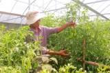 TX.Dĩ An: Nông nghiệp đô thị khẳng định hiệu quả