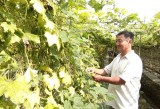 Khá lên từ mô hình chăn nuôi kết hợp trồng trọt