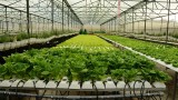 越南芹苴市与荷兰加强高科技农业合作