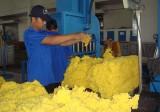 Công ty Cổ phần Cao su Phước Hòa: Nhiều kỳ vọng mới