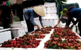 Fruit and veg exports feel the pressure of US-China trade war