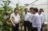 Điểm sáng về nông nghiệp công nghệ cao