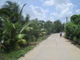 TX.Thuận An: Hiệu quả từ việc trồng cây chống sạt lở